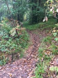 Curragh Trail